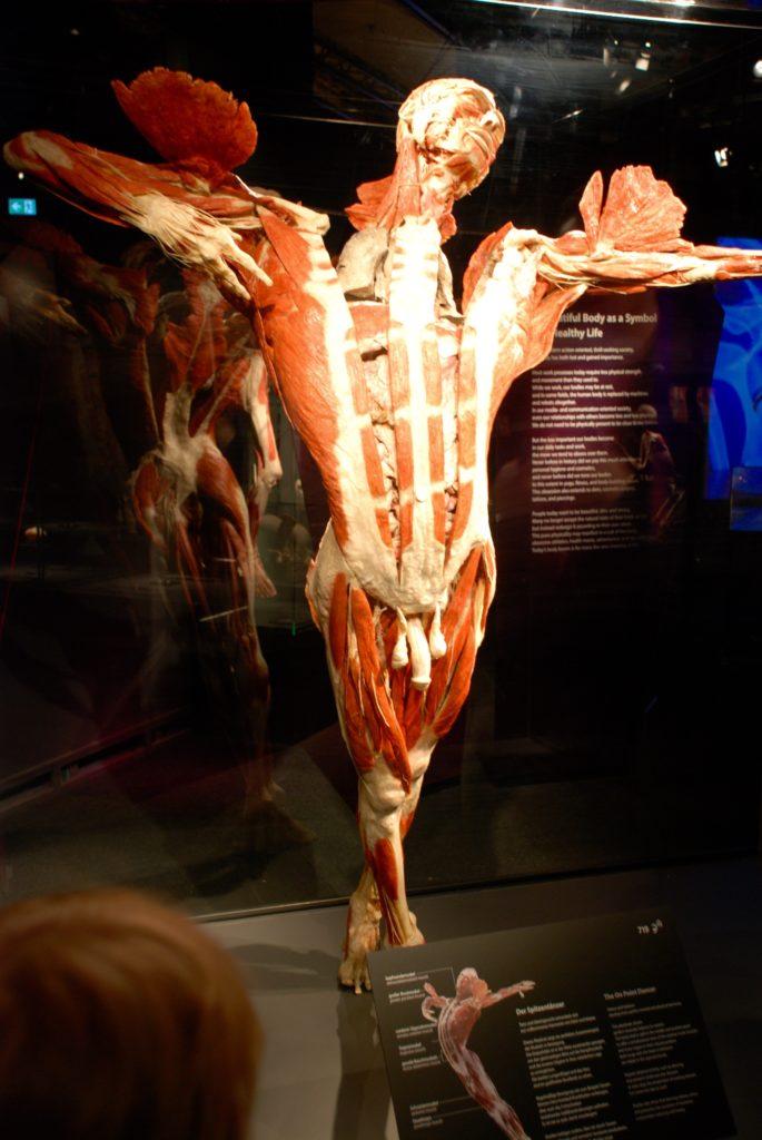 Plastinat i Menschen Museum, Berlin, Tyskland.