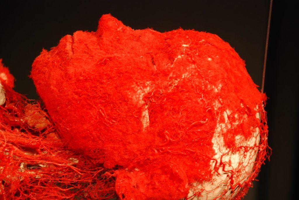 Nærbillede af hovedets blodårer på plastinat i Menschen Museum, Berlin, Tyskland.